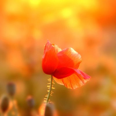 mohn-website-001